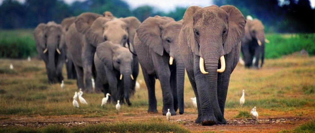 cropped-african-elephant-15911-hd-wallpapers12.jpg