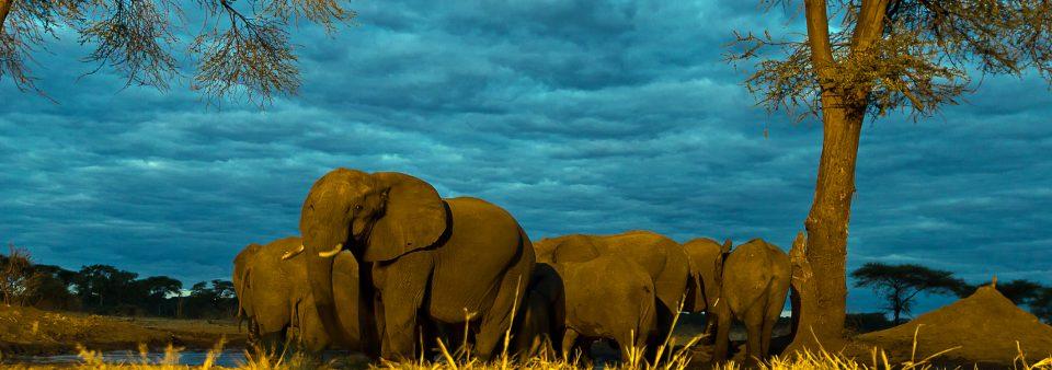 Chobe's Senyati Safari Camp