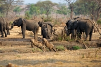 Senyati Safari Camp Waterhole
